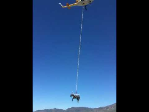 Horse Helicopter Rescue Helicopter Horse Rescue