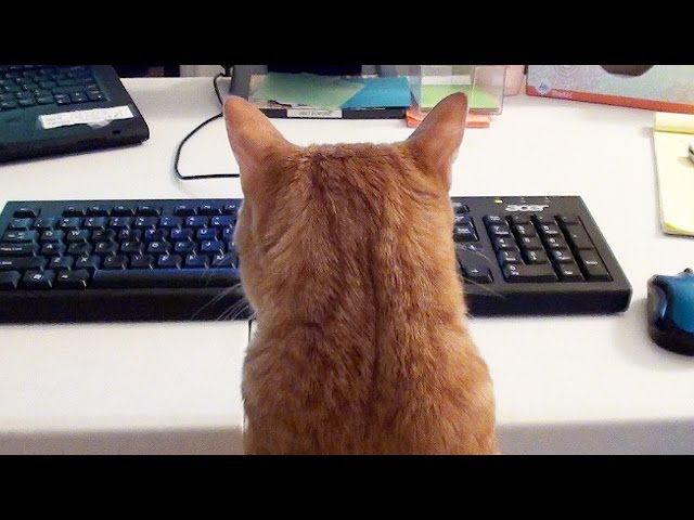 What it's like to Work with Cats!