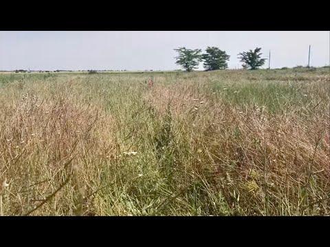 Как запустить заброшенные земли без обработки почвы