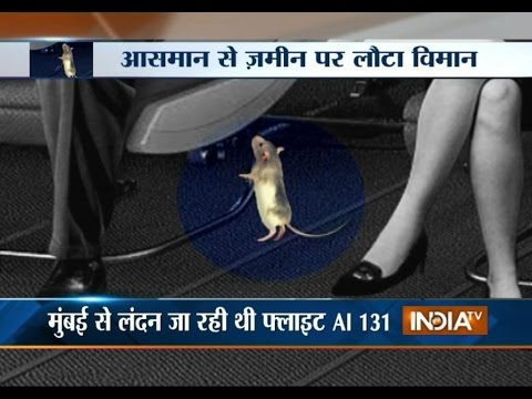 Rat Forced Air India Flight to Land Back at Mumbai Airport