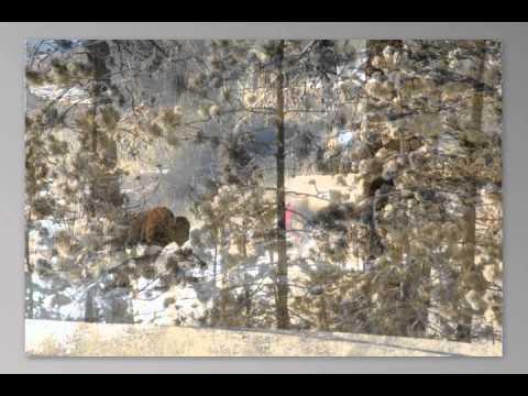 Yellowstone wildlife slide show