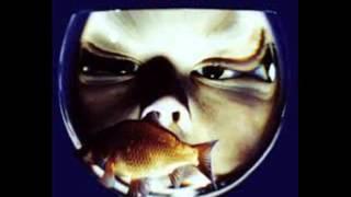 Watch Feeder Swim video