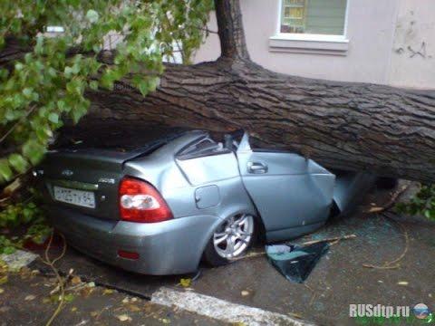 Куда звонить дерево упало на машину Мне поручили