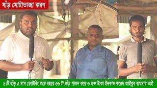 প্রতি ৩ মাসে ৬ টি করে গরু মোটাতাজা করে প্রতি বছর ৪ লক্ষ টাকা আয় করেন গাজীপুরের আইয়ুব ভাই