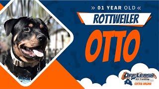 "1yo Rottweiler ""Otto"" Best dog trainers in Virginia"