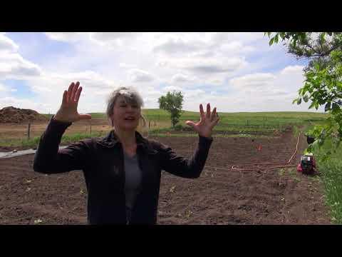 Auswandern und Leben in den USA Mein Garten in 2017  bevor der Tornardo