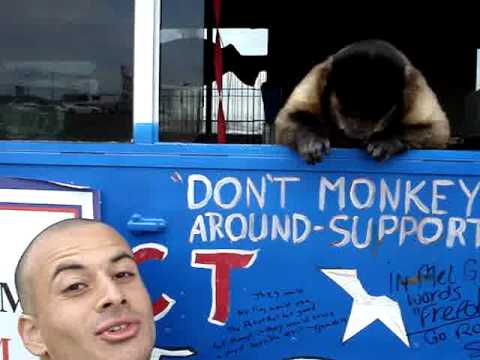 Diaper Monkey on a Chain - Hi 5 to the Bald Man Video