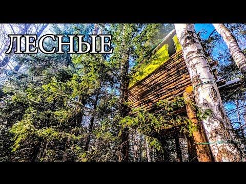 ДОМ НА ДЕРЕВЕ   УЛУЧШЕНИЯ И ОБУСТРОЙСТВО   BUSHCRAFT HOUSE on the TREE - UPGRADE - DIY