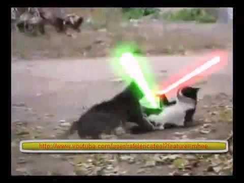 Kaķu cīņa citā līmenī