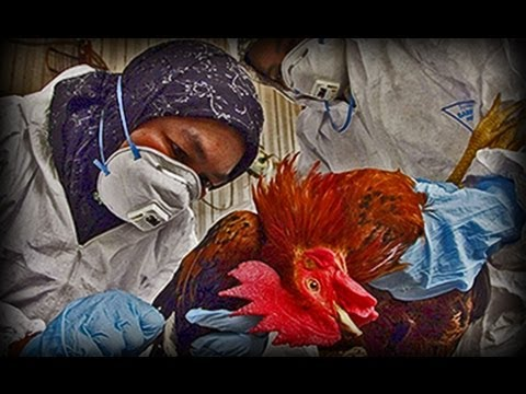 Avian Flu (part 2)