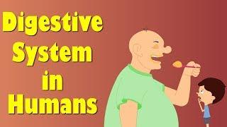 Digestive System of Human Body | #aumsum