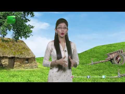 Des Diary: 10th June 2017 - Full Episode Green TV