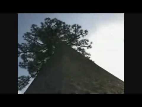 John Frusciante - Regret