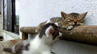 kitty sleep(寝る猫と遊びたい猫・・・)