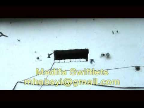 Uji Suara Walet - 3 video