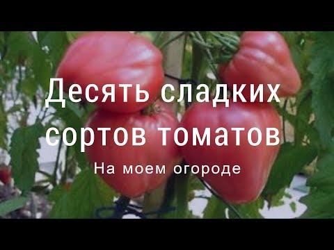 Сладкие сорта томатов на моем огороде. Юг западной Сибири