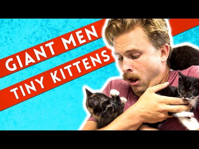 Giant Men Meet Tiny Kittens