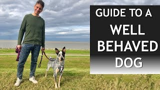 Your Guide to a Well Behaved Dog