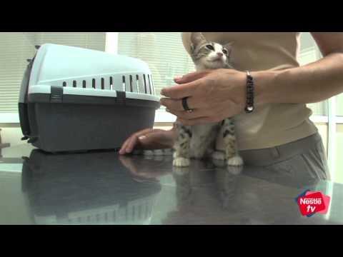 En qué consiste la esterilización de gatos - Mascotas Nestlé TV