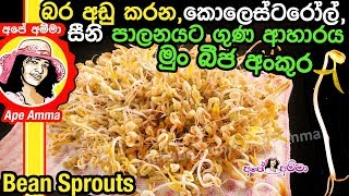 Healthy bean sprouts by Apé Amma