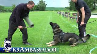 Urri z Kurimskeho haje - Tracking, Obedience and Protection Training Spring 2013
