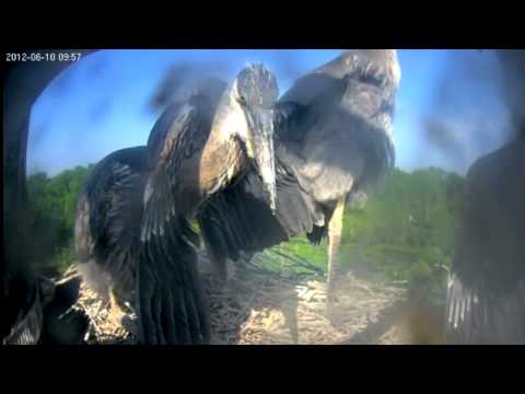 Heron Cam 2012 Highlights