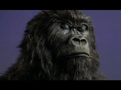 Cannes Lions classics: animals in advertising