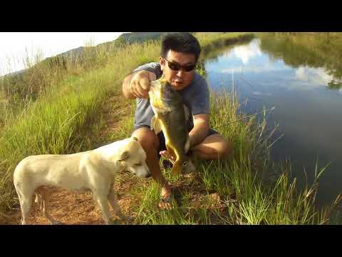 Surpresa Na Pescaria De Traíras.