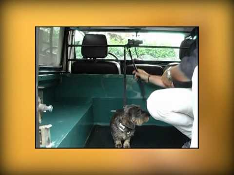 I consigli del veterinario 2