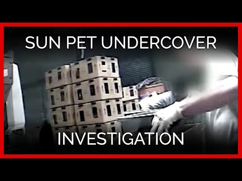 Sun Pet Undercover Investigation