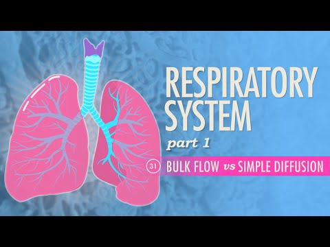 respiration coursework Application deadline fall 2017 application is now open deadline: june 15, 2017 new students for the bachelor of science in respiratory care degree are admitted one time per year and begin coursework in august all application materials, the application fee, official transcripts, and all supporting documents must be.