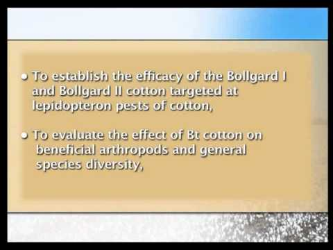 Bt cotton in Africa Video