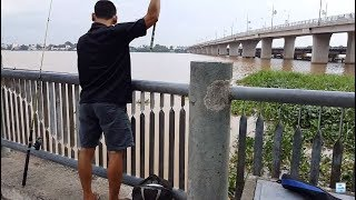 Câu cá giải trí - đi câu cá chép bị lôi cả cần xuống sông