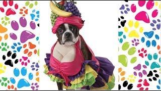 dogs with funny costumes: cani con costumi divertenti