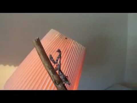 The Praying Mantis Fly Swatter