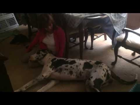 Dog craps on owner