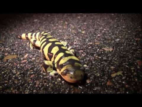 Metamorphosis: Amphibian Nature Documentary