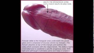 Human penis part 8 FRENULUM OF PENIS 18+ Educational purposes.(jklakhani)