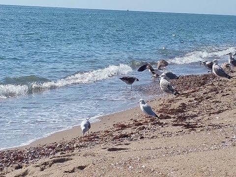 Море 2018.Украина.Свой пляж. Эко-дача база отдыха .