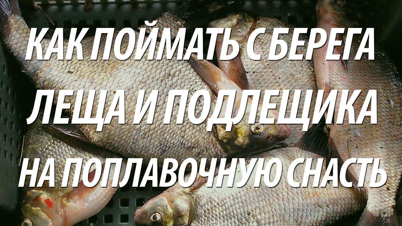 рыбалка на леща с берега