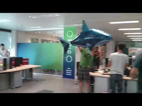 OdigeO Madrid Office - Shark Attack!