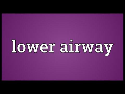 Header of Lower Airway