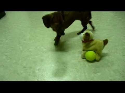 把球塞到玩具狗的腳下,看NaNa怎麼取出來。