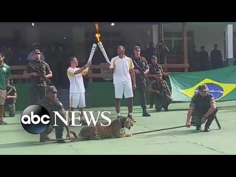 Escaped Jaguar in Olympic Ceremony Shot in Brazil
