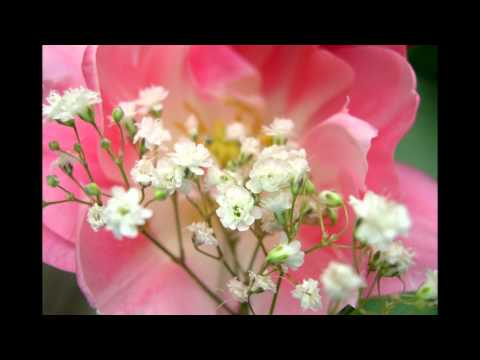 ✿Flowers And Gardens With Relaxing Music~(HD)✿´´¯`•.¸