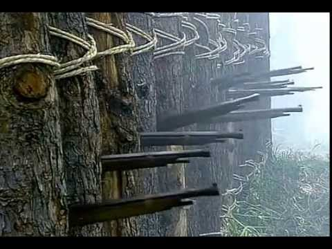 Download Battle of Nagashino 1575 Mp4 baru