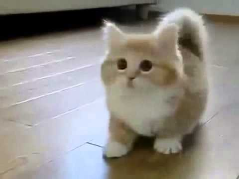 Simons Cat Baby Cat