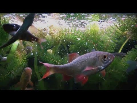 My 200 liters cold water fish tank playlist for Cold freshwater fish