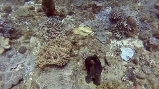 20181015 Bikini South octopus
