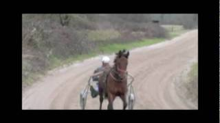 jema horse team russian part2.wmv